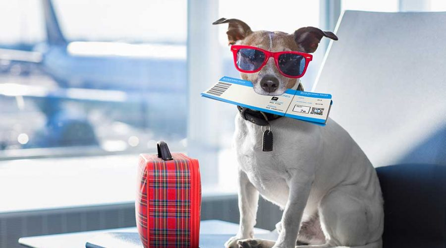 5 Things to Pack When Travelling with Your Pet