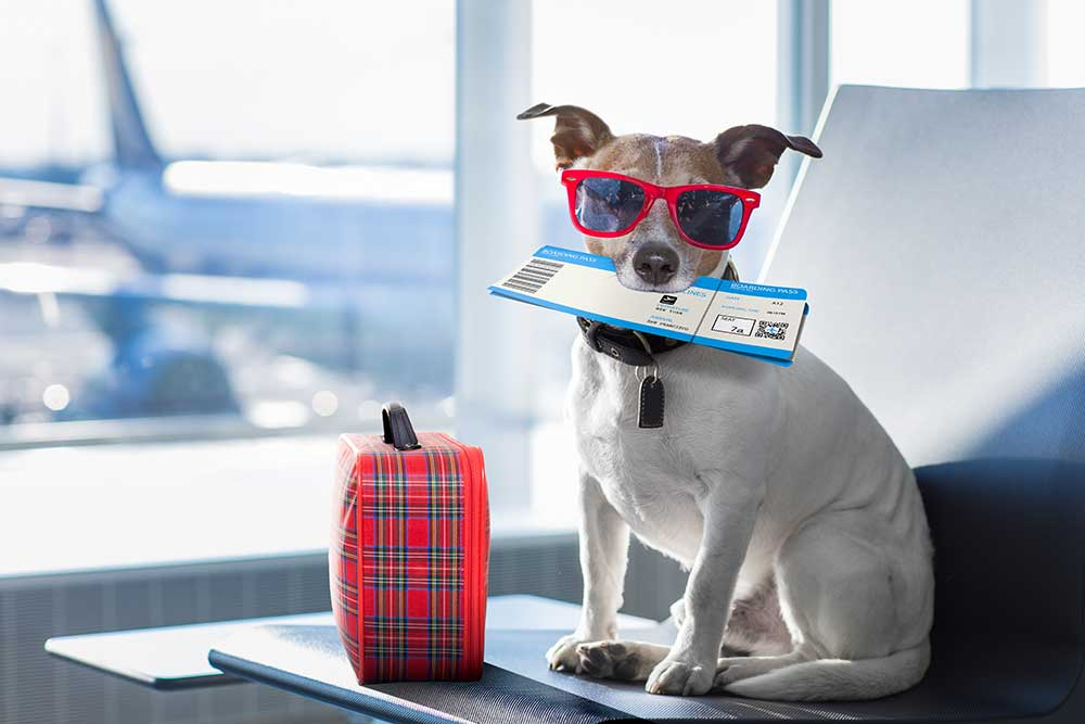 5-Things-to-Pack-When-Travelling-With-Your-Pet