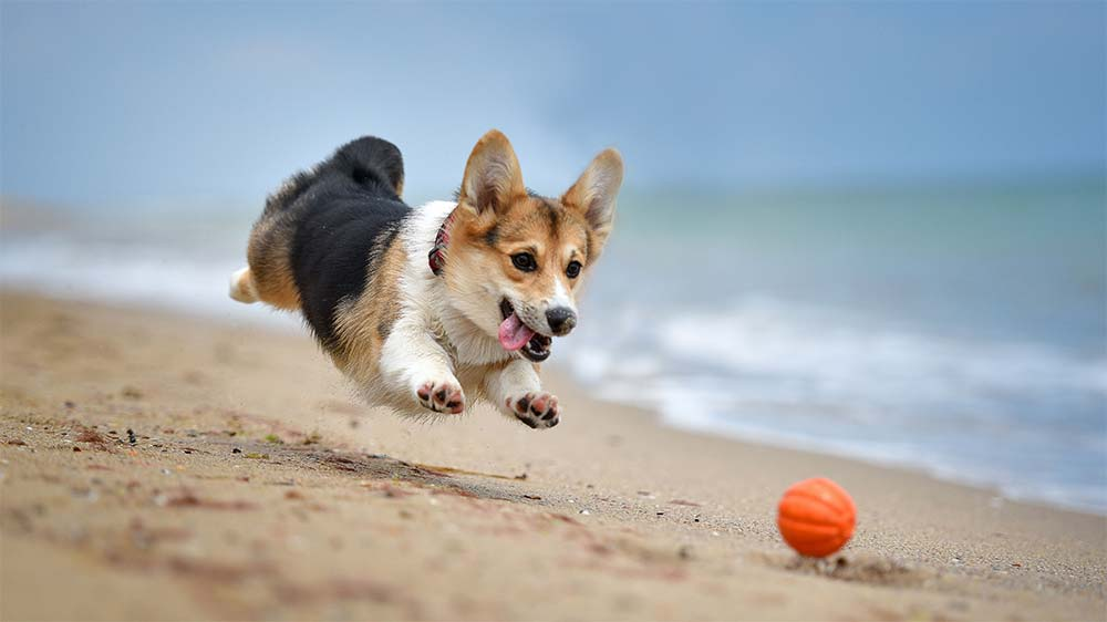 Beach-Toys-to-Enjoy-With-Your-Dog-This-Summer