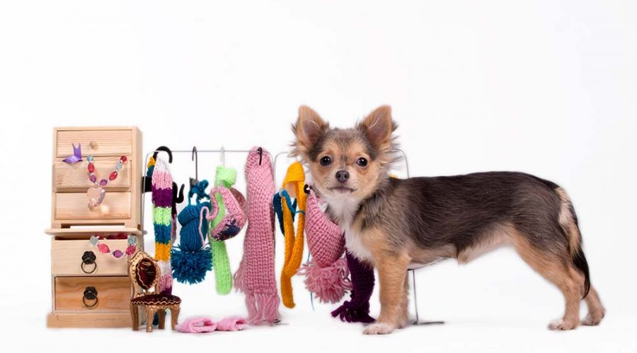 A Complete Guide to Pet Accessories
