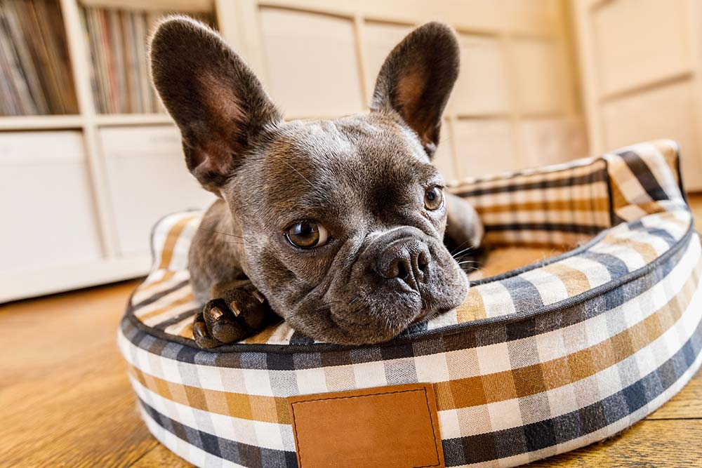 How-to-Choose-the-Best-Bed-for-Your-Pet