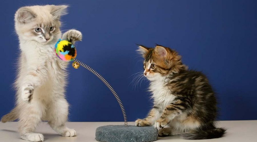 The 5 Best Cat Toys That Will Keep Your Kitties Entertained