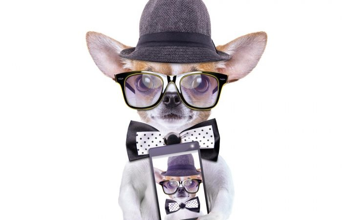 10 tips for making your pet Instagram famous