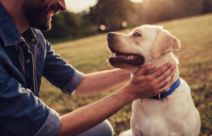 Must-have items when getting a new dog
