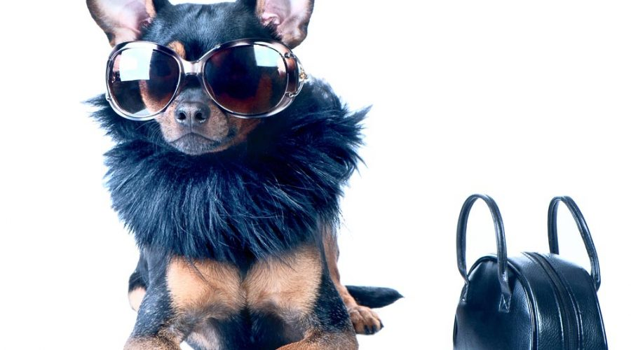 What are the most popular pet fashion accessories in 2019?