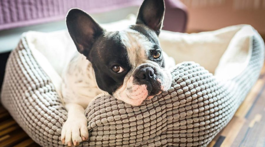 What is the best dog bed for your pooch?